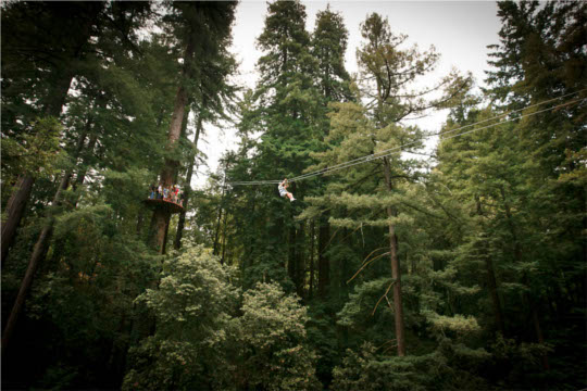 Redwood Canopy Zip Lines