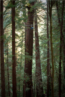 Redwood Zip Lines - Santa Cruz California